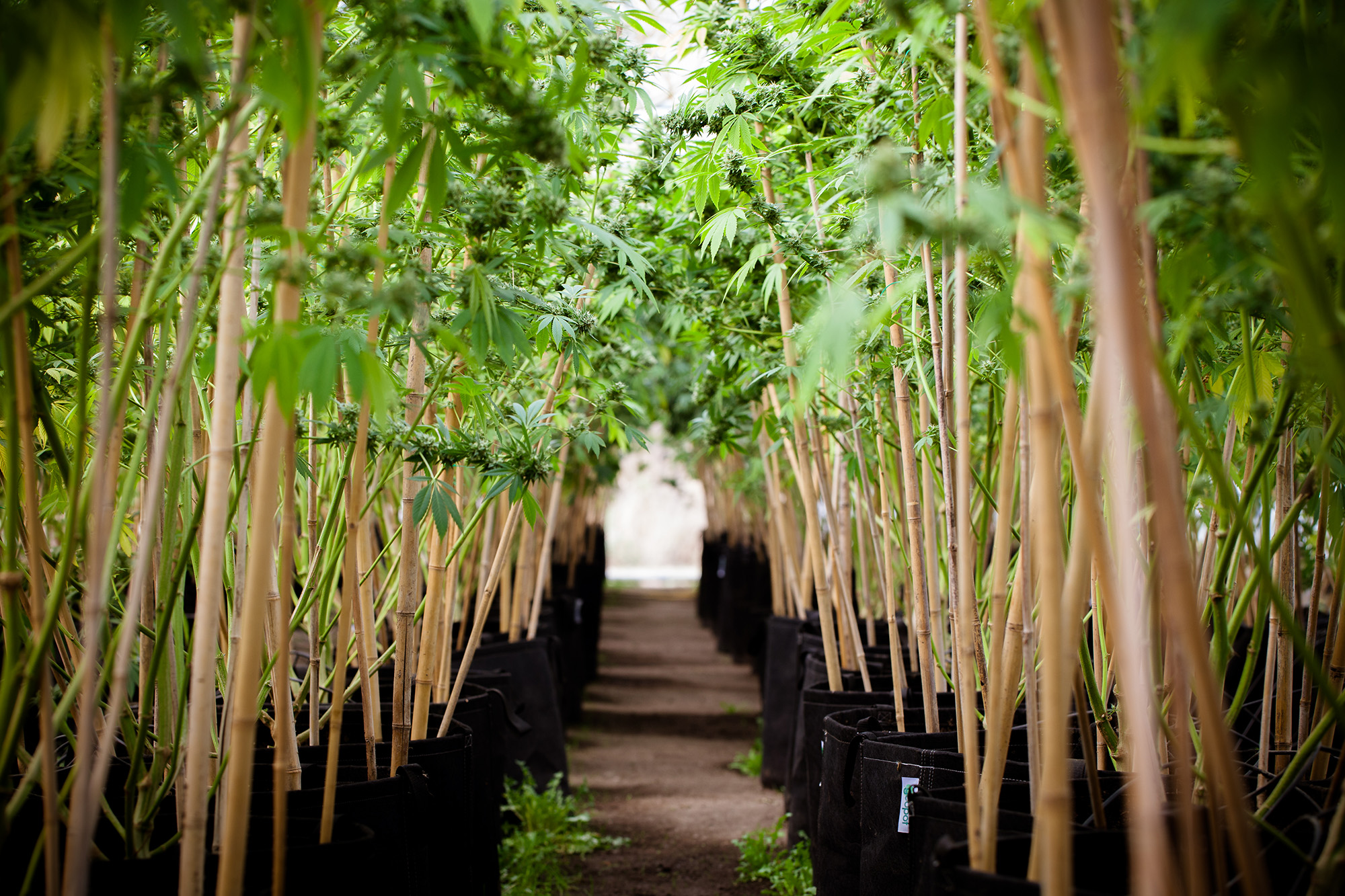 Product Directory | Humboldt Cannabis Magazine